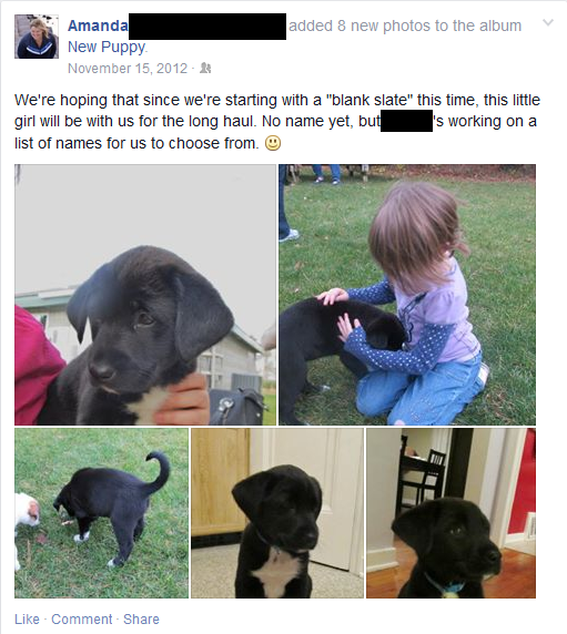 Lefty - Facebook Post - new puppy
