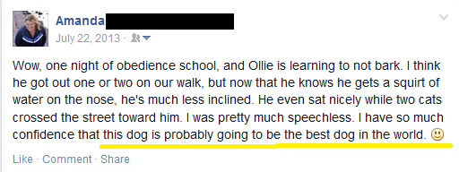 Ollie - Facebook Post 2